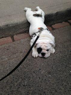 16 perros que consideran totalmente finalizado su paseo...