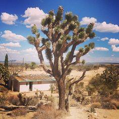 Mojave desert #abandoned from my instagram feed august 2013 -- hot!