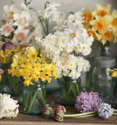 Reveling in abundant blooms in this photographic ode to Spring. http://georgiannalane.com/2014/03/spring-tableau.html