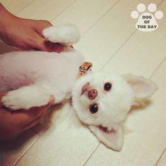 DOG OF THE DAY   Jul.29,2012 @monaca_uta