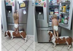 REIKI NEWS: Cão ajuda bebê a assaltar geladeira: assista!!!