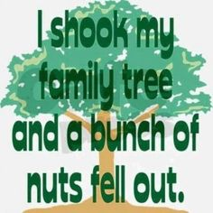 Yup.  A tree full of nuts.