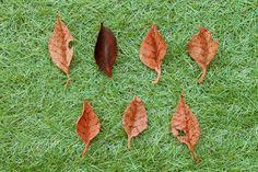 ▼SUIT【fallen leaves.】※1234567は売り切れました。落ち葉のようなブローチです。革でできた、落ち葉のようなブローチです。 1 2 ... ハンドメイド、手作り、手仕事品の通販・販売・購入ならCreema。