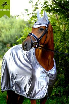 Horses from Space