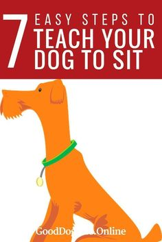 Teaching your dog to sit is easy. But it's also one of the best dog training commands for your puppy to know. Learn how here!
