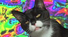 This Cat Is High as Hell