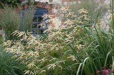 Aruncus 'Horatio' - Piet Oudolf's Favorite Perennials