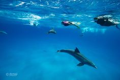 They came and swam with us for ages. #Gratitude #ontheirownterms #bucketlist #swimwilddolphin #wilddolphin