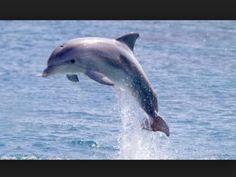 My favorite sea animal