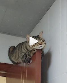 Resting On Door /Funny video Cute Funny Animals, Cute Cats, Funny Cats, Funny Humor, Funny Stuff, Animals And Pets, Baby Animals, Cute Marshmallows, Video Chat