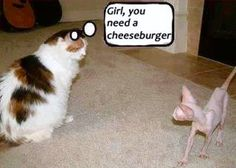 Girl, you need a cheeseburger!