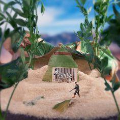 zebre-sucre-chasseur