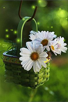 lovely little daisy basket Daisy Love, Daisy Daisy, Good Morning Quotes, Morning Sayings, Morning Messages, Morning Images, Have A Great Day, Pretty Flowers, Daisy Flowers