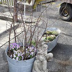 CT Ipex GmbH - Cleopatra's Duft-Oase– Fotos Business Help, Plants, Photos, English Artists, Sculptures, Planters, Plant, Planting
