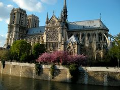 Notre Dame on a beautiful sunny morning in spring, with the Cherry blossoms in bloom.