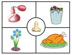 Body Parts Preschool Activities, Five Senses Preschool, 5 Senses Activities, Preschool Writing, Educational Activities, Toddler Activities, Diy Kaleidoscope, Family Worksheet, Animal Worksheets