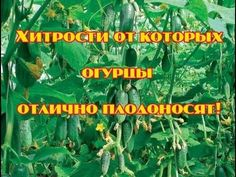 Small Farm, Gardening Tips, Planters, Youtube, Cucumber, Gardens, Sodas, Flowers, Plants