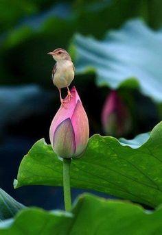 bird on a rose