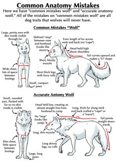 WOLVES, momo-no-aware: It seems like all of the...