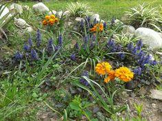 Primavera e'