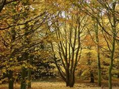 Leaves of Autumn - Sinatra -