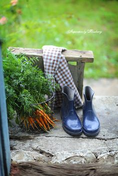 The Gardener's been pulling carrots that will taste so sweet!