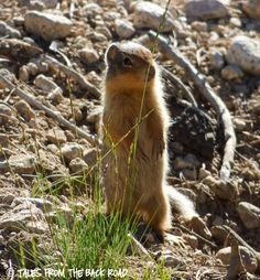 Stanley to Sun Valley, Idaho and pulling an RV. What beautiful scenery to see. Sawtooth Mountains, Sun Valley Idaho, Baby Squirrel, Scenery, Friends, Animals, Amigos, Baby Chipmunk, Animales