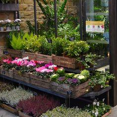 Les plantes et les cagettes à l'entrée de la boutique
