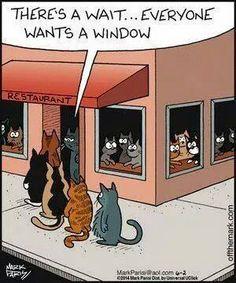A todos los gatos les gustan las ventanas