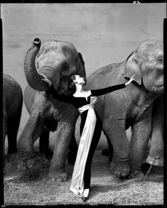 Richard Avedon: Dovima with the Elephants. Photographed at the Cirque d'Hiver, Paris, in August 1955. The dress was designed by Yves Saint Laurent for Christian Dior.