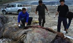 Sperm Whale Died & Washed Up on Spanish Coast Swallowed 17kg of Plastic, Linked to Trader Joe's Parent Company, Aldi