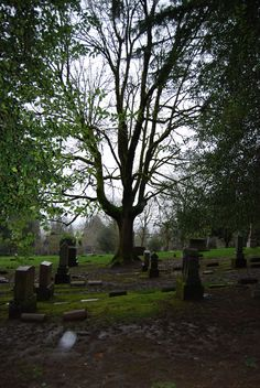 riverview cemetery tree with orbs copyright 2011 Brenda Roudebush