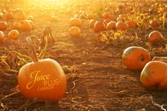 Fall family fun at affordable pricing at The Robinson Family Farm. Includes corn maze, hay rides,petting zoos and our pumpkin patch. Pumpkin Patch Pictures, Pumpkin Photos, Haunted Corn Maze, Best Pumpkin Patches, Stuff To Do, Things To Do, Happy Thanksgiving Day, Happy Fall, Juice Plus
