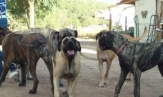 Left to Right: Martha, Jack (in the back), Jill (in the front), Theodore (Apricot), and Roxy.