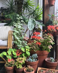 Are you ready to burning and improving your brain by having fun with Troll questions? Container Plants, Container Gardening, Flower Gardening, Indoor Gardening, Pocket Garden, Inside Plants, Plants Are Friends, Plant Pictures, Good House