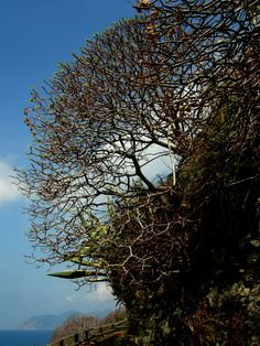 zoraki tanımlama... ne de gereksiz! (Cinque Terre)