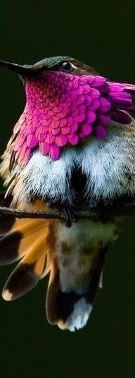 Beautiful Hummingbird. S) Love Moments