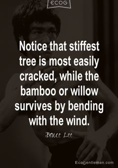 Notice that stiffest tree is most easily cracked while the bamboo or willow survives by bending with the wind. Quote by Bruce Lee