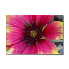Pink and Yellow Wildflower Magnets on CafePress.com