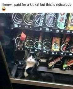 Kit kat got stuck – Humor Bilder The Beast, Dump A Day, Seahorse Facts, Minions, Going Blind, Cat Plants, Like A Cat, Lap Dogs, Cat Quotes