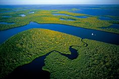 Mangrove swamps in the Everglades National Park, Florida - photo by Yann Arthus-Bertrand;  In the most Southern part of the Florida peninsula, the Okeechobee Lake's freshwater meets the Gulf of Mexico's saltwater in the swamps covered by the Everglade mangroves.