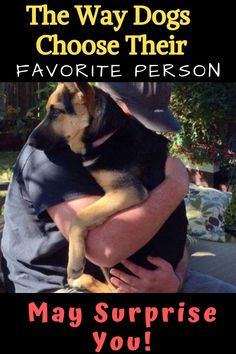 You would think that a dog's favorite person would be whoever gives them the most food and attention, right? Does your dog have a favorite person? This is How Dogs Choose Their Favorite Person Cute Puppies, Dogs And Puppies, What Kind Of Dog, Gsd Dog, Dog Mixes, Dog Language, Work Horses, Dog Facts, Cute Funny Animals