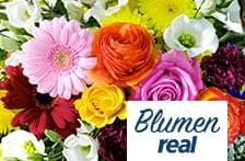 EMV Online-Shop Online Shopping, Rose, Flowers, Plants, Kids Wagon, Pink, Net Shopping, Plant, Roses