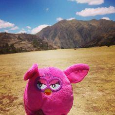 En #Chinchero hace tanto #viento que a #Furby se le vuelan las orejas #Perú #softtoys #wind #peluches #pelucheando
