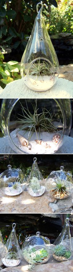 AIR PLANTS / SUCCULENTS :: Different display ideas...