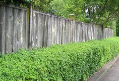 Another example of layering plants and a fence.