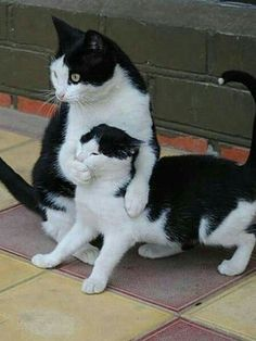 cat family (Check out 20 Funny Cat Pictures Make You Melt) - Baby katzen - Funny Cute Cats, Cute Baby Cats, Cute Little Animals, Cute Funny Animals, Kittens Cutest, Cats And Kittens, Silly Cats, Siamese Cats, Crazy Cats