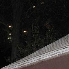 Nietypowy sposób ozdabiania sufitu - http://onebur.net.pl/?page_id=12