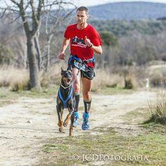 by @lobopiloto Canicross with my dobe!!!---                          #runningwithdogs #trailrunning #dogs #doglover #ilovemydog #dogsofinstagram
