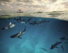 Shark pack.
